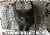 cat pyramid scheme